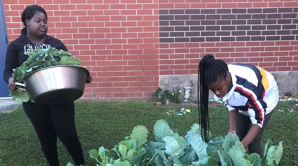 Gardening Club Harvests Vegetables